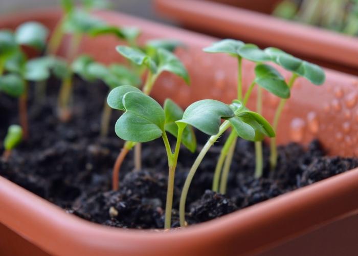 Jardiner pour manger bio!