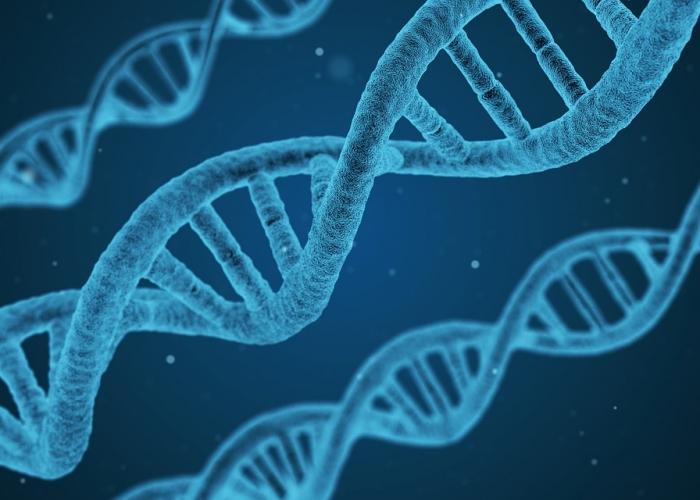 Mutation génétique MTHFR