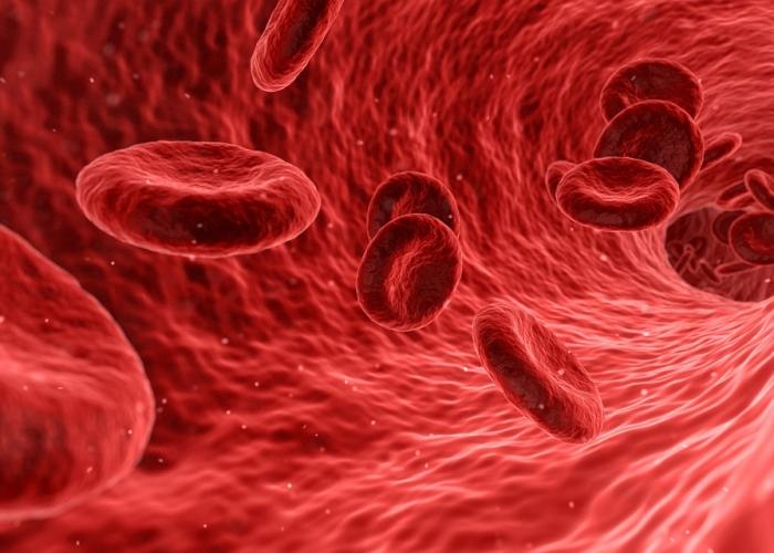 Anémie: globules rouges et transport de l'oxygène