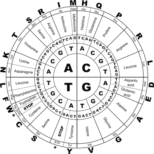 Acides Aminés / ADN