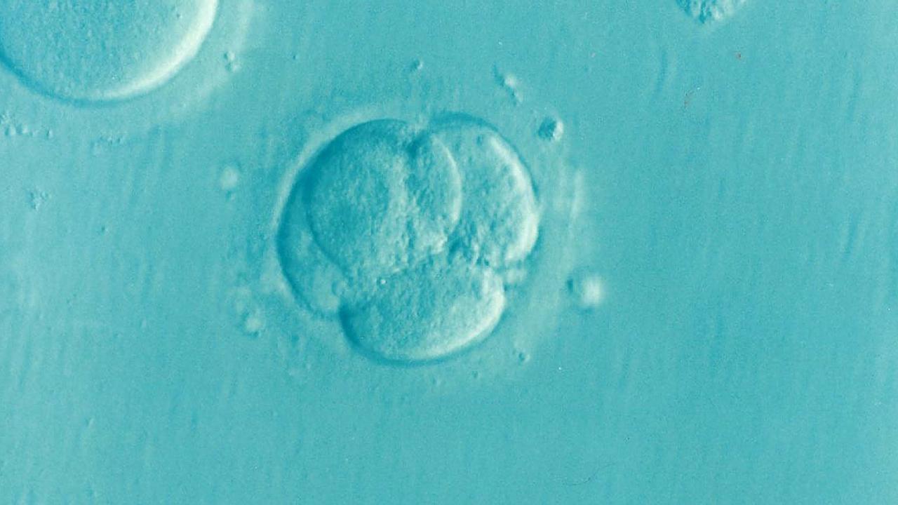 Soutien naturopathique de la fertilité