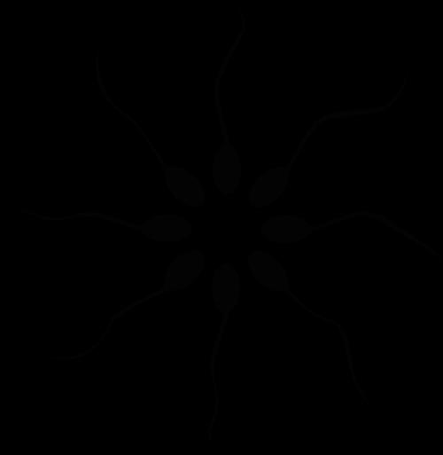 Lycopène et Spermatozoïdes